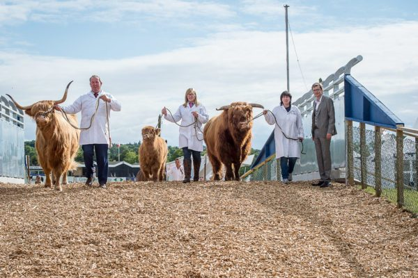Cattle 'flyover' in contention for top industry award