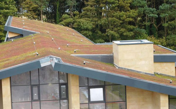 Turfing out traditional roofs